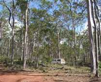 Driving through Coominglah State Forest.