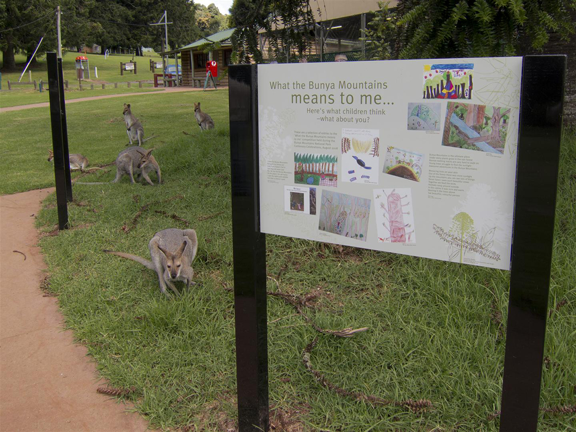 Kangaroos laze around the day-use area, near a sign featuring children's artwork representing what the Bunyas mean to them. Day-use area facility buildings are in the background.