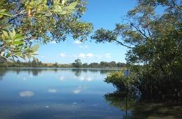Mangroves, Kolan River