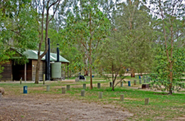 Camp under the eucalypts at Crows Nest National Park. Photo: E. Collins © Queensland Government