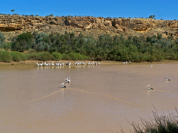 Permanent waterholes are a perfect place to photograph waterbirds at Diamantina. Photo courtesy Mark Lithgow.