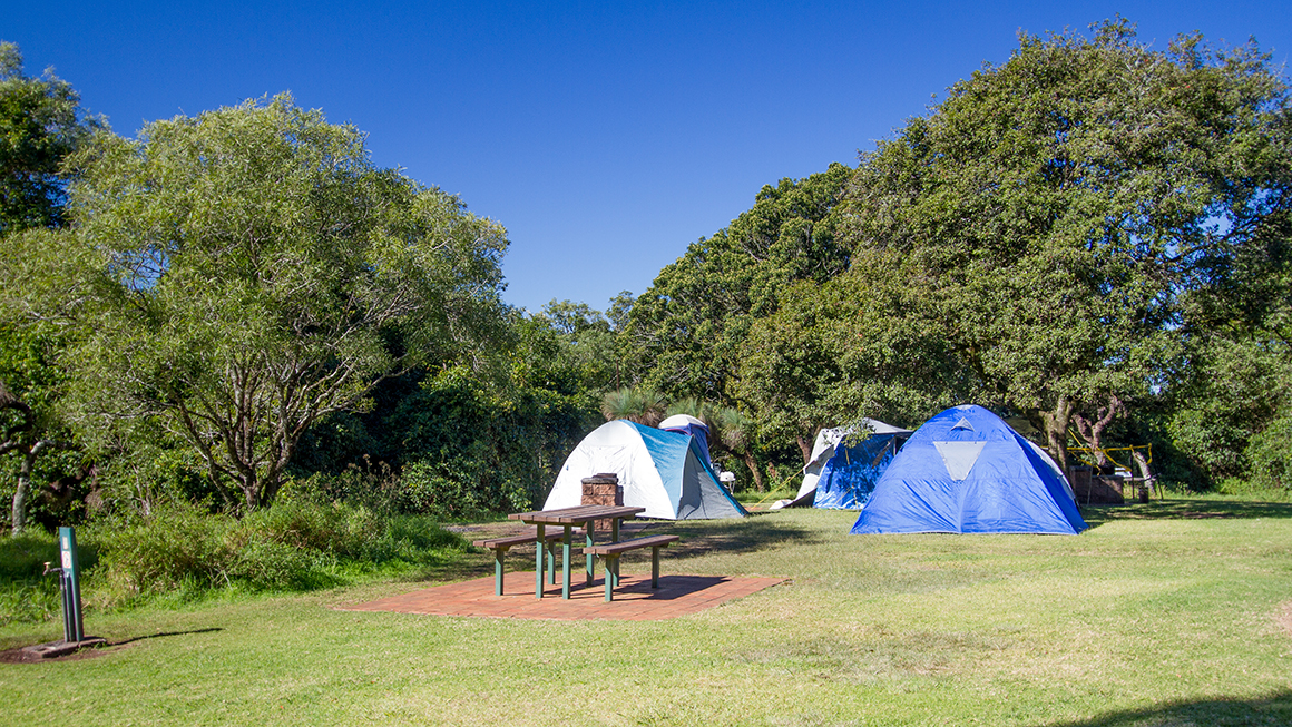 Three blue domed tents sit clustered together in a neatly mown grassy space near a picnic table with a backdrop of forest.