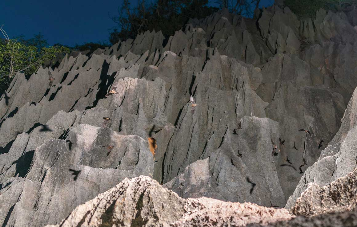 Jagged pinnacles of a limestone cliff rise almost vertically towards the night sky and tiny bats in flight are silhouetted against the rock.