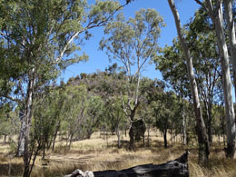 Enjoy a picnic and short bushwalk in the pleasant bushland setting. Photo: courtesy of Jacqui Brown.