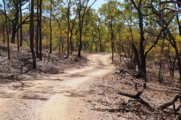 Tracks within the park are narrow and rough. Photo: Queensland Government