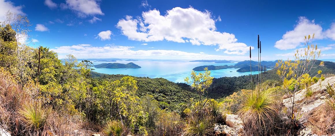 View from a vantage point high on the island, looking over forested islands floating on azure ocean, with bright blue skies and fluffy white clouds overhead, and grass trees in the foreground.