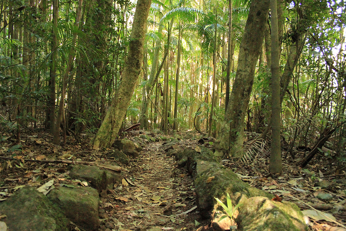 A track leads through a forest of tall slender palm trunks with light green foliage above.