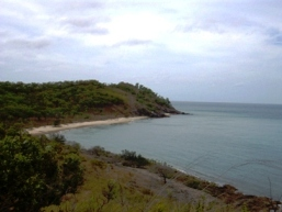 Possession Island is covered woodland and open heath. Photo: Queensland Government.