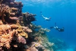 Fringing reef, Clam Gardens, in Watsons Bay, Queensland. Photo: Tourism Queensland.