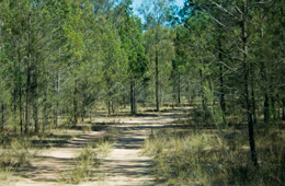A 5 km drive leads through the park's eucalypt and cypress woodland communities.