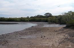 Mangroves and intertidal flats of Maaroom declared Fish Habitat Area