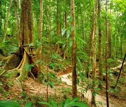 Rainforest trail. Photo: WTMA.