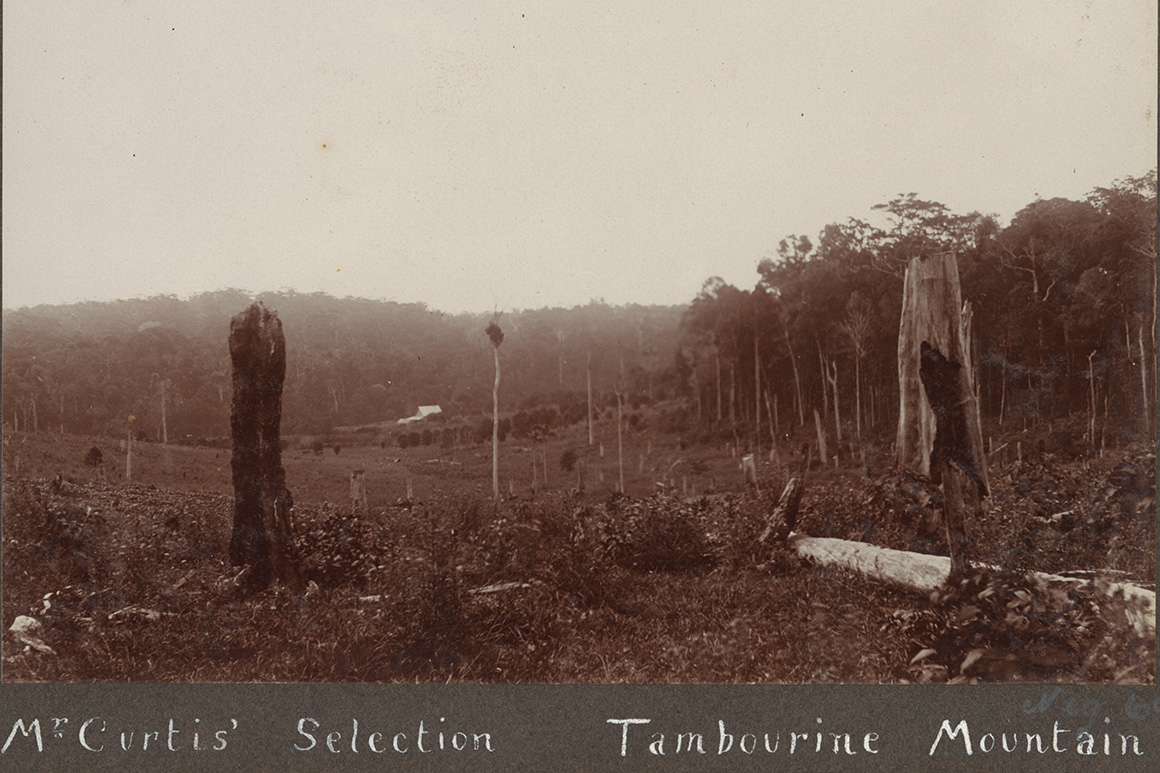 An old sepia image of sawn-off tree stumps, fallen logs and foliage on a hillslope fringed by forest.