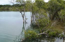Currumbin Creek declared Fish Habitat Area