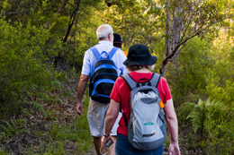 Image of a group of adults walking through the forest with backpacks on.