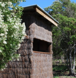 The bird hides are nestled amongst flowering Melaleuca bracteata in late Spring. Photo: Sophia Levy, Queensland Government.