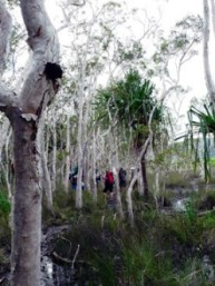 Melaleuca swamps on the Thorsborne Trail. Photo: Tamara Vallance, Queensland Government