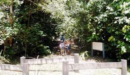 The first trail head on Wabunga Wayemba rainforest walking track. Photo: Tamara Vallance.