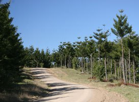 The access road to Peach Trees camping area, Jimna State Forest.