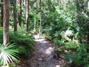The Palm Grove walk is accessed via the Wooroi day-use area. Photo: Queensland Government.