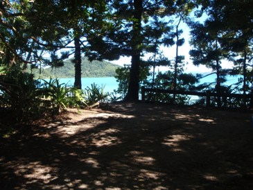 Joes Beach camping area. Photo: Queensland Government.