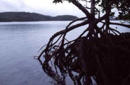 Newry Island mangrove. Photo: Queensland Government.