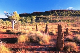 Termite mounds, silver-leaf box and bloodwoods are scattered throughout Boodjamulla's open grasslands, Queensland. Photo courtesy of Tourism Queensland.