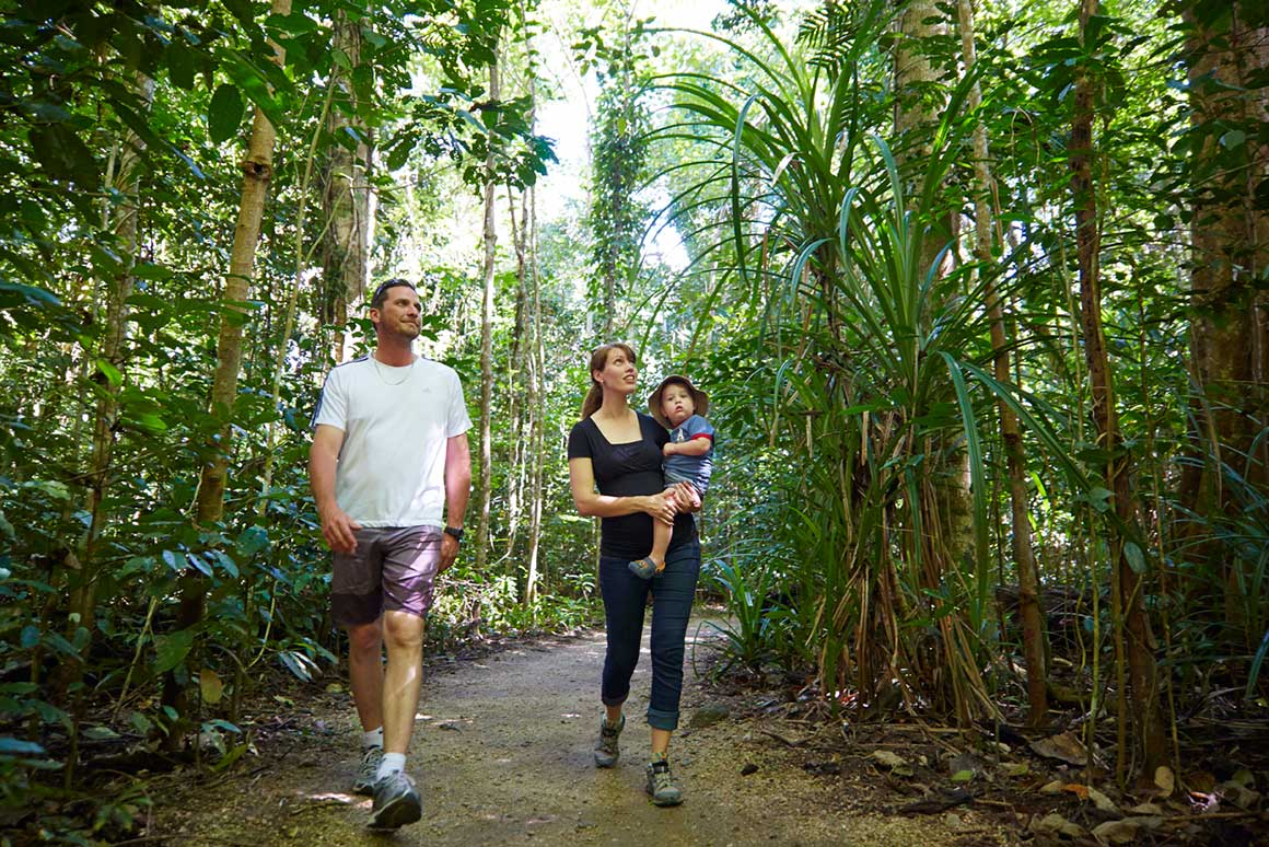 Man and woman carrying child striding along on walking track through rainforest, gazing into the canopy