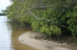 Eudlo Creek, Maroochy declared Fish Habitat Area