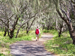 Walker with backpack, walking down a path amidst trees.