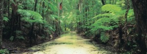 Wanggoolba Creek is sacred to the Butchulla people and provides a tranquil place to wander in the cool rainforest at Central Station.