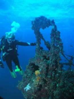 Diver observing the variety of coral growing on the wreck. Photo courtesy of and copyright Scuba World, Mooloolaba.