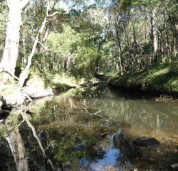 Griffith Creek runs beside the Griffith Creek camping area. It is a great place to camp or have a picnic. Photo: Queensland Government.