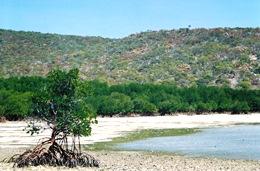 The islands have a varied landscape. Photo: Julie Swartz, Queensland Government.