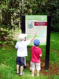 Children looking at the Tulip oak walk trail sign.