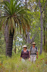 Sections 4 and 5 of the Great walk lead up and across the Consuelo Tableland, also known as the 'Roof of Queensland'. Photo A. Creed, Queensland Government.