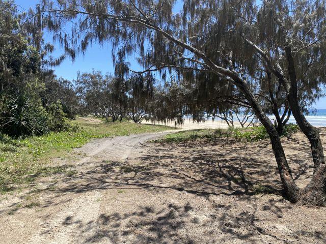 Image of Teewah Beach camping area zone 6