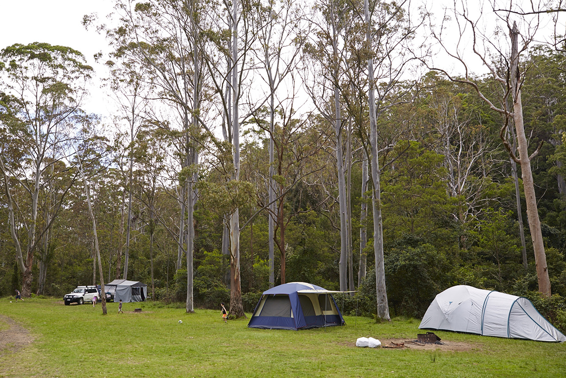 Three family-sized dome tents sit in a green grassy clearing fringed by the tall timbers of surrounding forest.