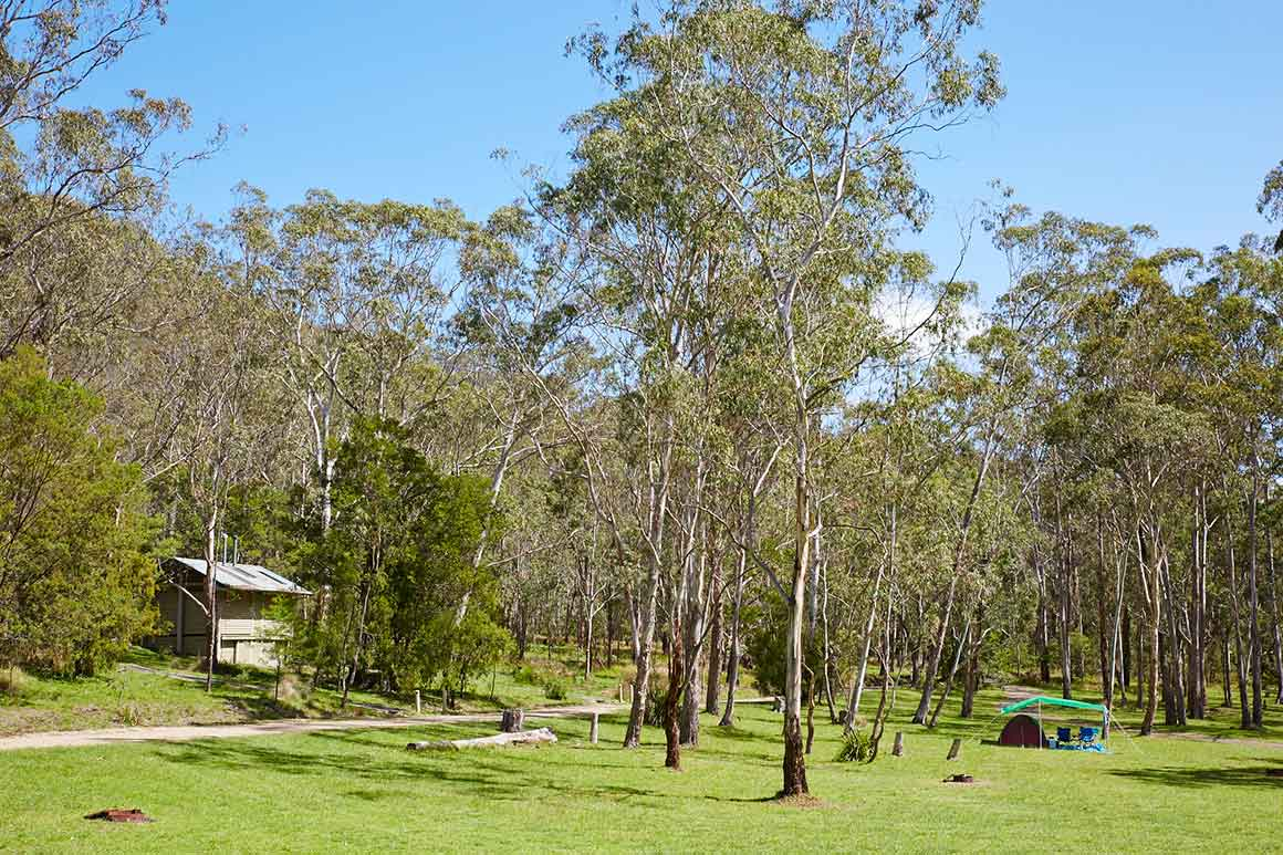 A small amenities block nestles into the surrounding forest, in a grassy clearing where tall eucalypts are interspersed among the camp sites.