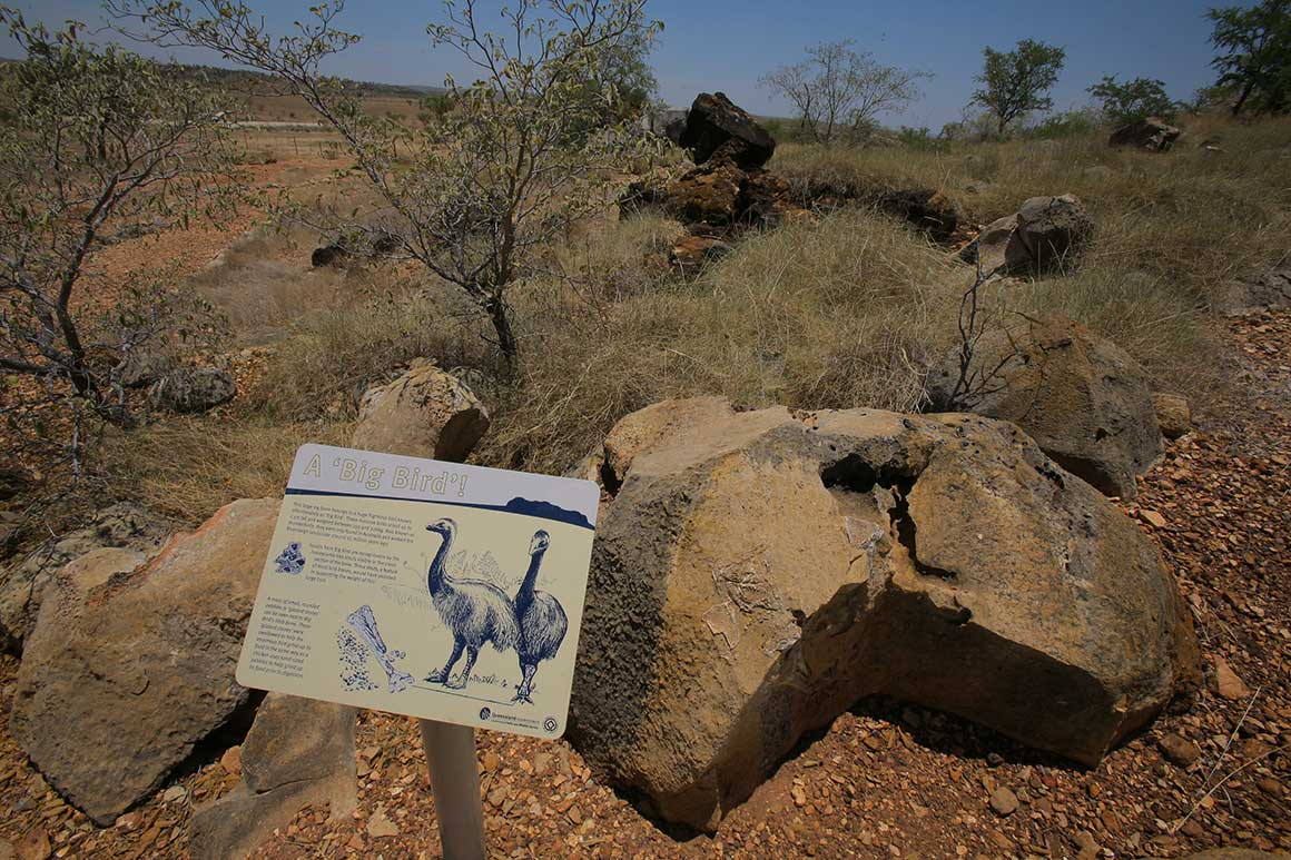 Interpretive sign placed in front of fossil-bearing rock alongside a walking track explains about Big Bird fossil.