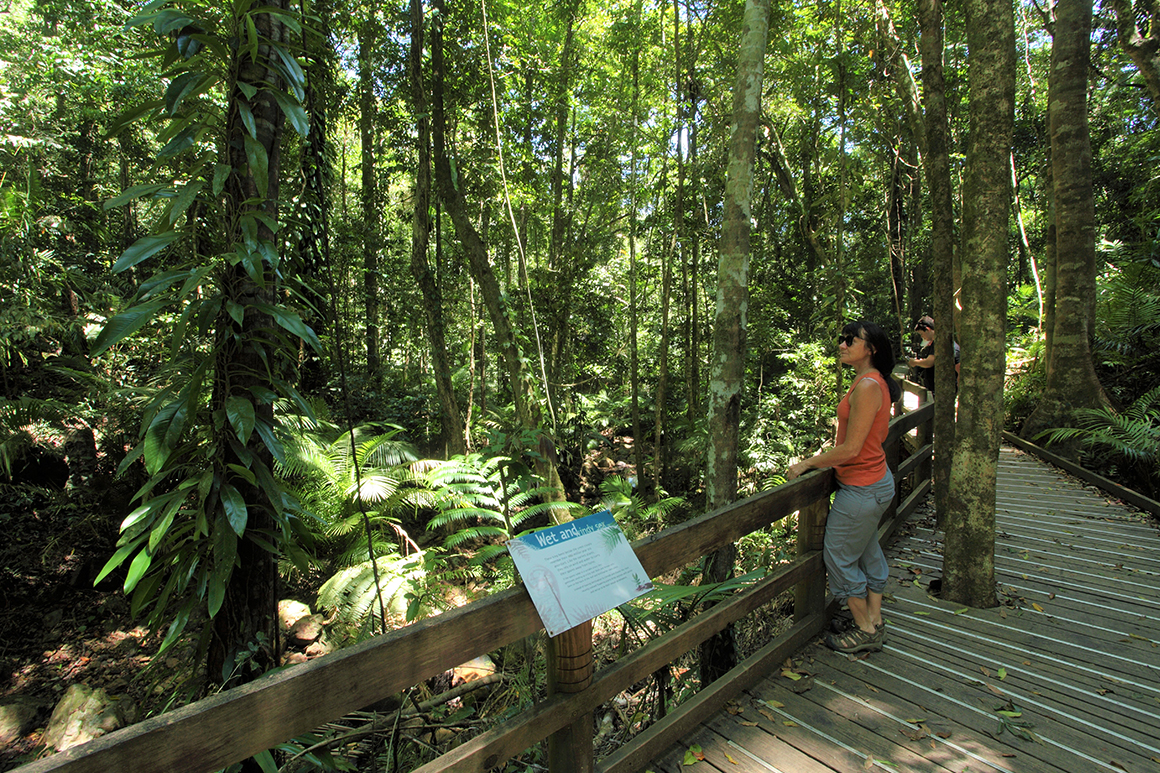 Alt text< a visitor leans on the handrail of a boardwalk surrounded by rainforest and cycads.
