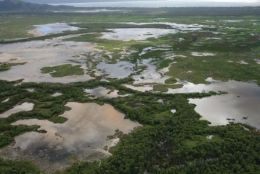 Aerial view of the Town Common wetlands during the wet season. Photo: Billy O'Grady, Queensland Government