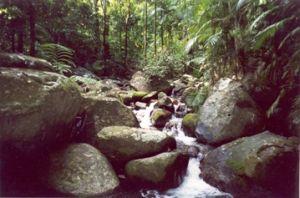 Image of Rainforest creek, Cannabullen Creek track.