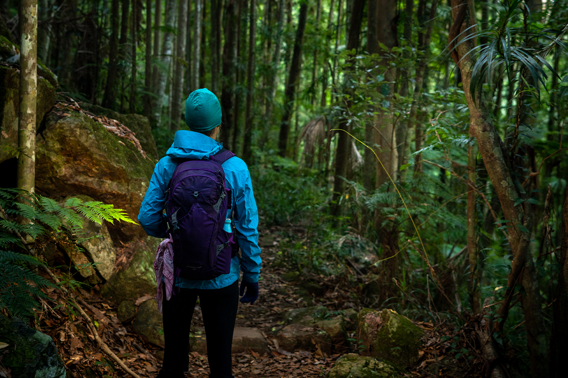 : A hiker in bright rain gear on a walking track surrounded by lush green rainforest.