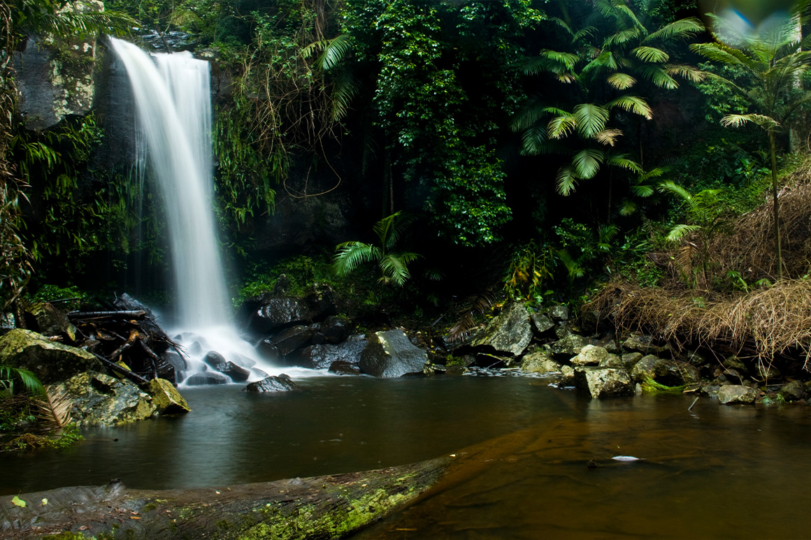A waterfall descends into a rock pool framed by small, moss-clad boulders and lush green rainforest.
