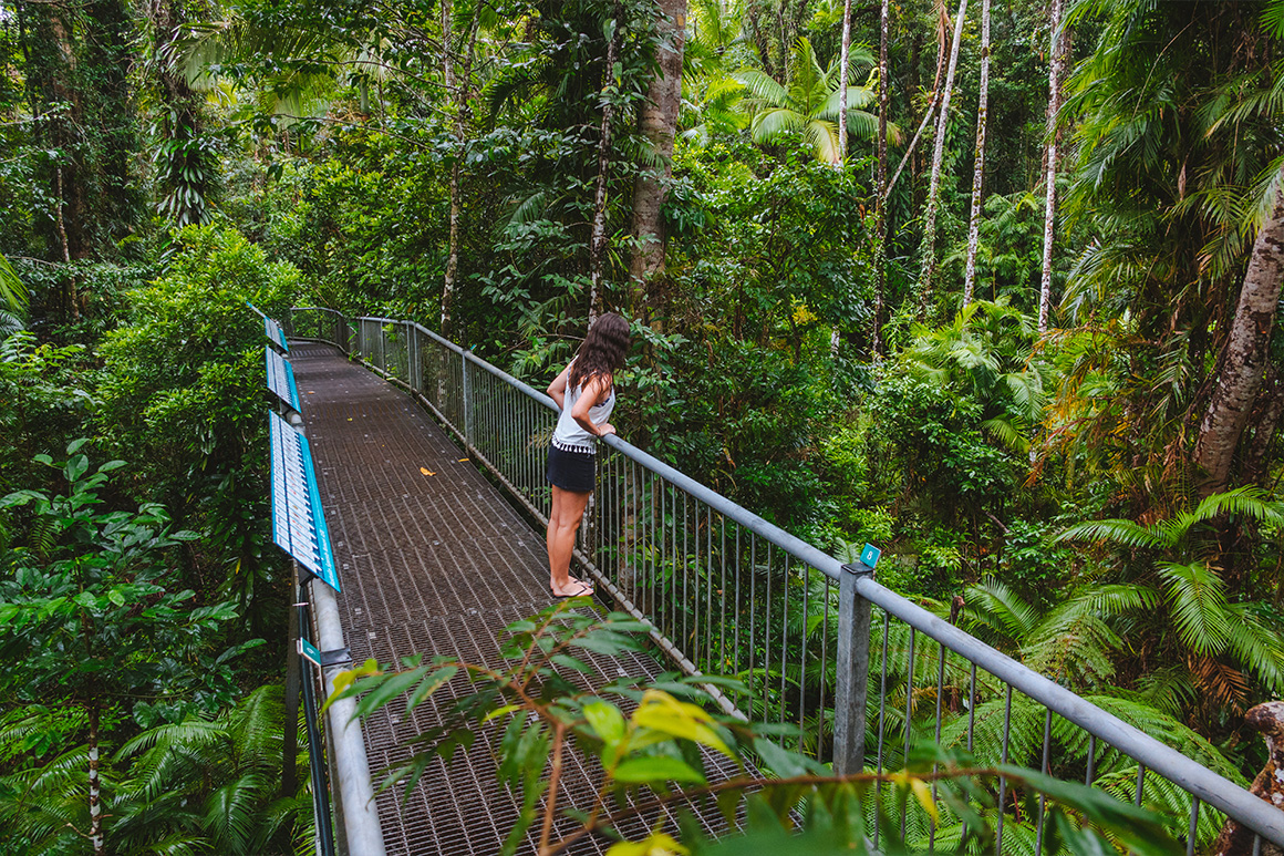 Alt text< visitor leans against railing of elevated walkway through dense rainforest.