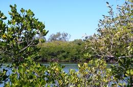 Baffle Creek declared Fish Habitat Area