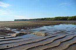 Silty-sand foreshore, Kippa-Ring declared Fish Habitat Area
