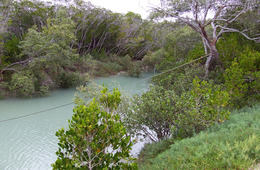 Mangrove-lined creek, Broad Sound