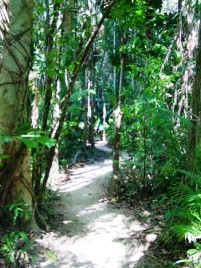 Fan Palm walk, Djiru National Park.